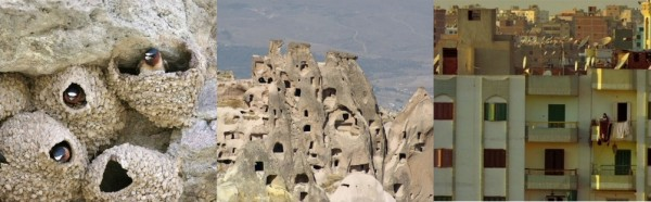 swallow mud nests; Cappadocian cave houses; an Egyptian apartment complex